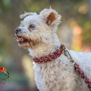 Macrame dog collar and lead set