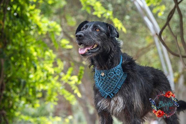 Handmade macramé pet accessories macrame dog bandana