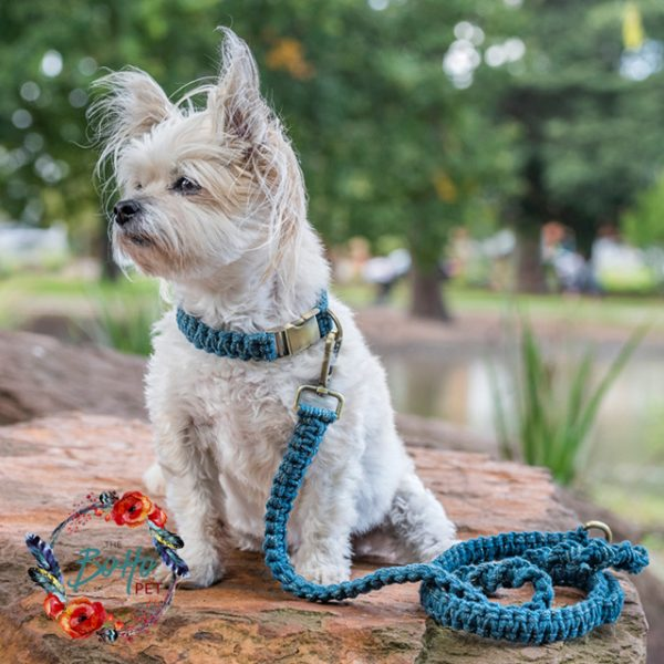 Deep Sea Shimmer Macrame dog lead & collar