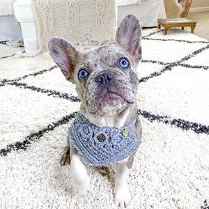 frenchie dog wearing handmade macrame dog bandana