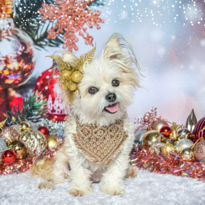 christmas dog macrame bandana